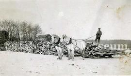 Two Horse Team Hauling Wood