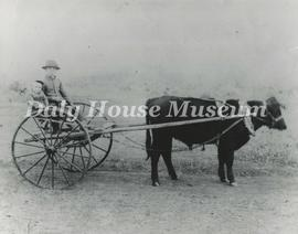 Mansfield's Ox-Drawn Cart