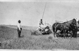 Hersh Leibovitch cutting wheat with binder 1